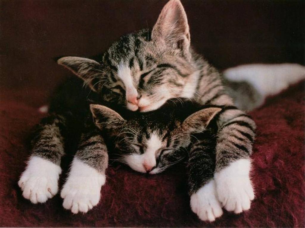 Два милых котенка. Так нежно