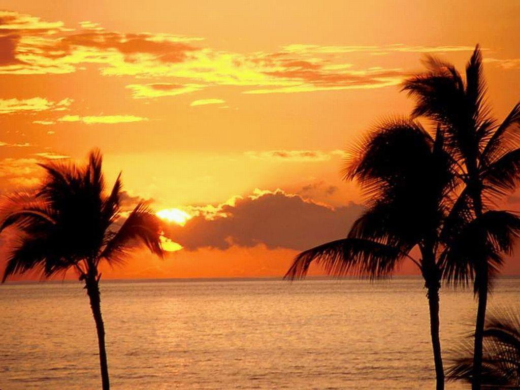 tramonto rosso giallo arancione sole palme palma mare oceano acqua ...